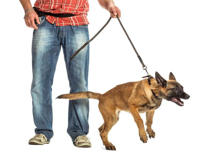 如何停止狗狗吠?