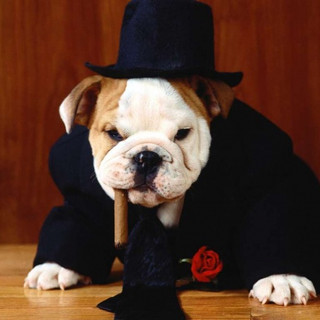 600_Bulldog-boss-dog-wallpaper-1024x768.