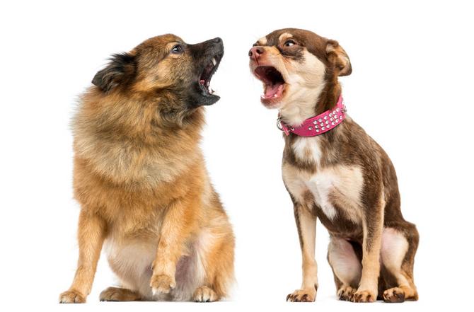 為什麼我的狗要不停吠!吠!吠!