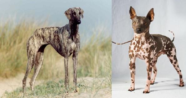 狗的品種有多重要?