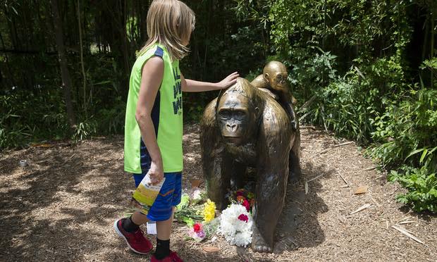 男童誤墜大猩猩圍欄,引致大猩猩被殺,總結是人生命的價值比動物高?