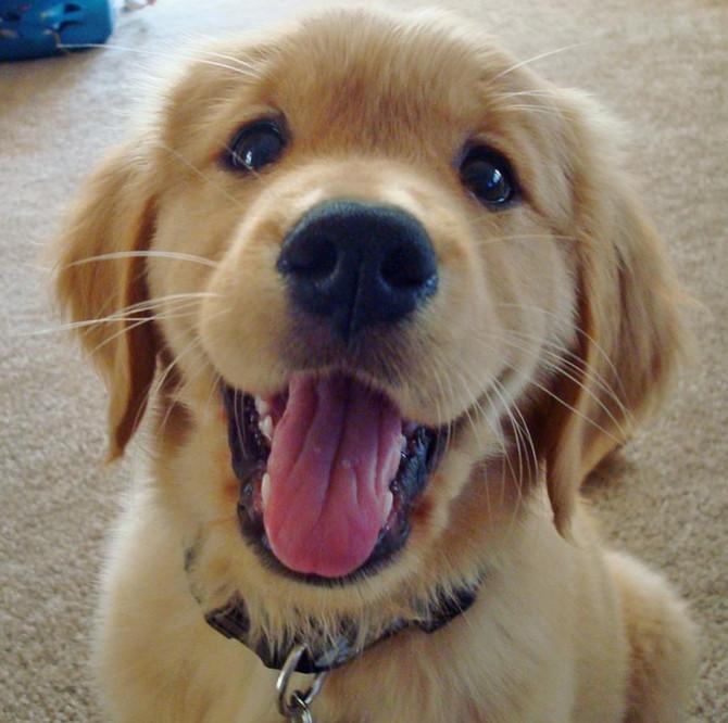 狗狗喜歡自己的名字嗎?