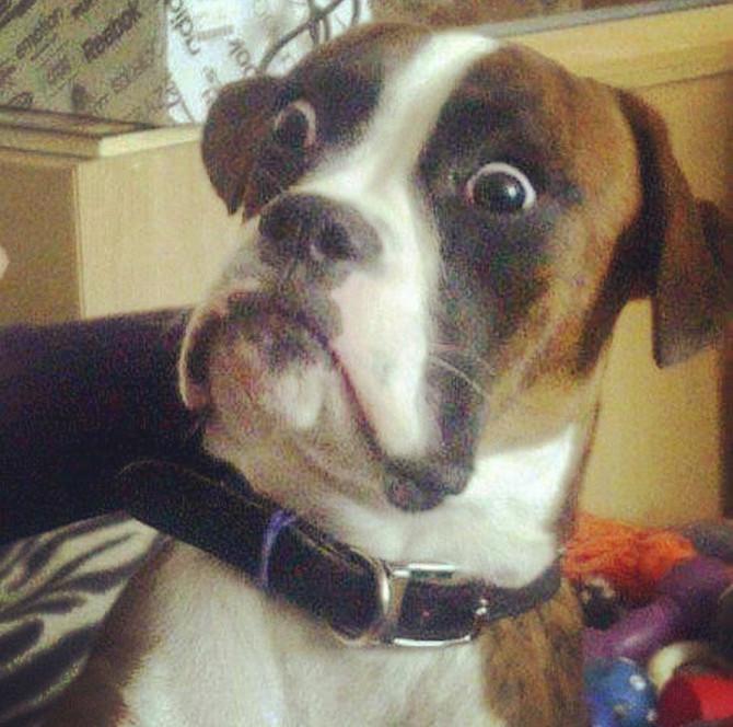 狗的聲音恐懼症!