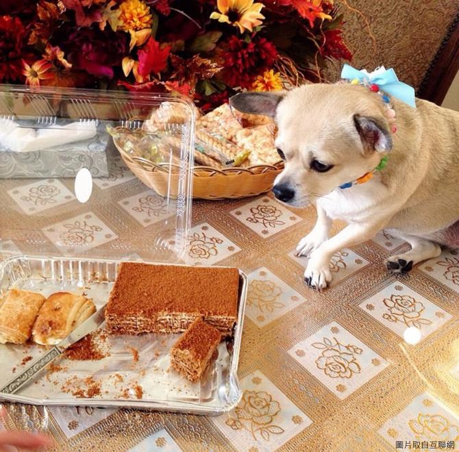 為什麼我的狗狗什麼也愛吃?