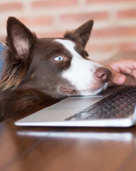 在家工作期間如何防止狗狗的騷擾?