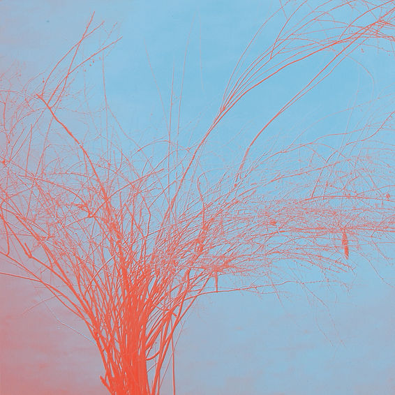 Engraved Landscape 01_40x40_pigment print_2016_.jpg