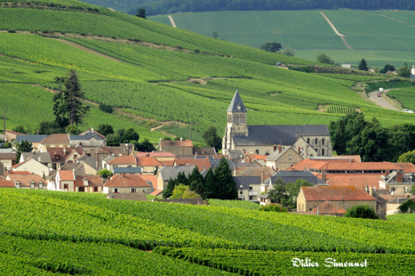 LE-MESNIL-SUR-OGER---Marne---photo-Didie