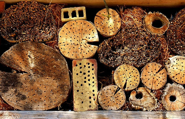 insect-hotel-2421136_1280-1024x658.jpg