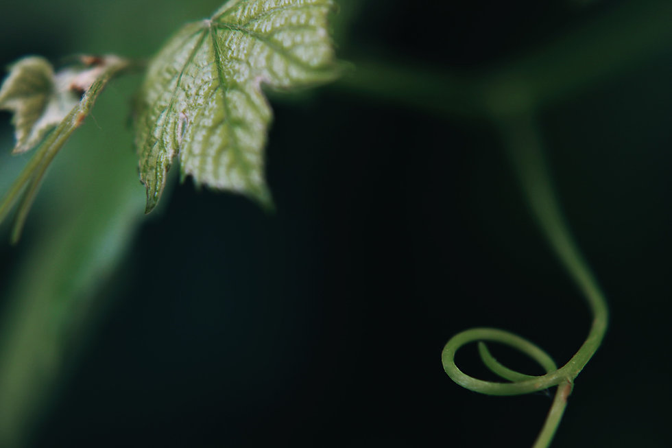 green leaf plant in selective focus phot
