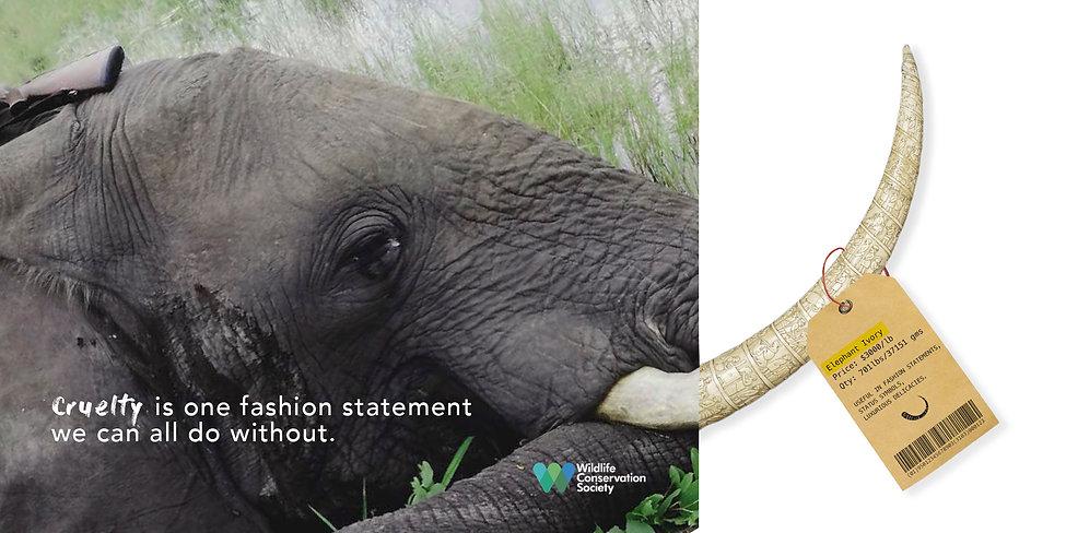 elephant single NEW.jpg