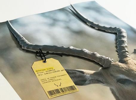 Antelope Ivory Poster Detalis