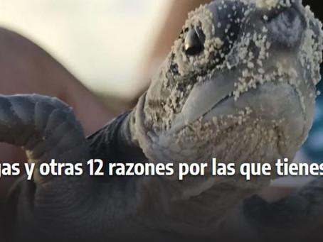 12 razones por las que tienes que visitar Cozumel por Cultura Colectiva, ¡Salimos en el número 12!