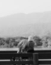 Screen Shot 2018-05-05 at 7.14.54 PM.png