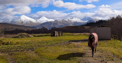 Crianlarich Hills, Stirlingshire (3776a)