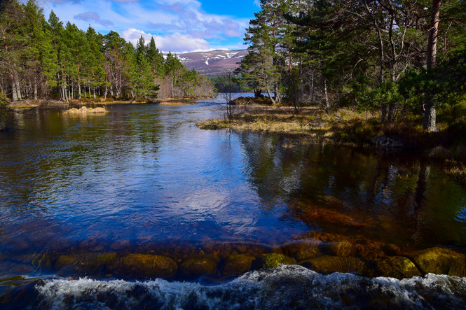 Loch Morlich, Cairngorms (8991)