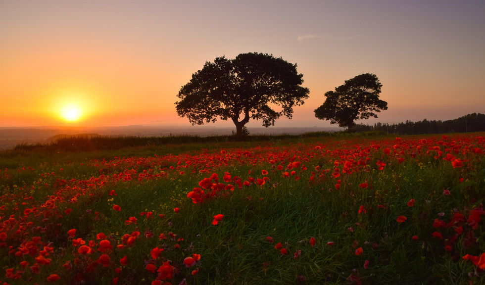 Poppy Field Sunset_3296a