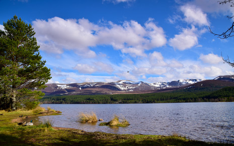Loch Morlich, Cairngorms (8942)