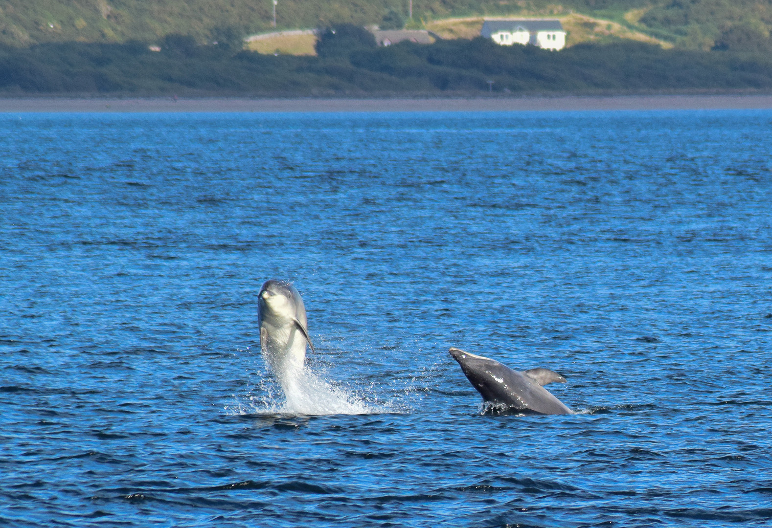 Chanonry Point_0391