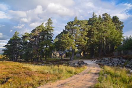Gelder Shiel Bothy, Balmoral Estate (3577)