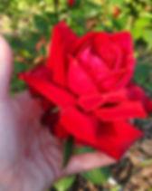 aruusu_edited.jpg