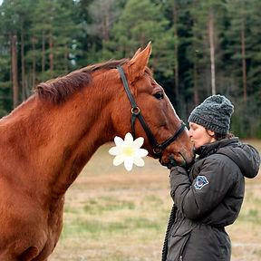 VK hevoset ilmantaustaa2.jpg