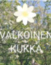 valkoinenkukka[7151].jpg