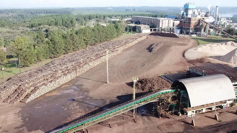 Playa de acopio de rollos de pino y chip de madera, materia prima para la producción de celulosa y papel