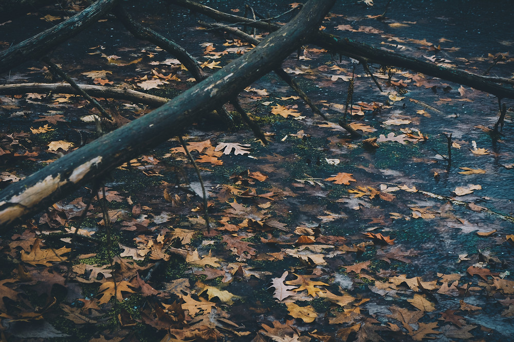 Branch with orange fallen leaves beneath