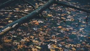 Como está sendo o outono em você?
