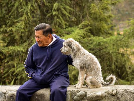 Taking Care of Senior Dogs