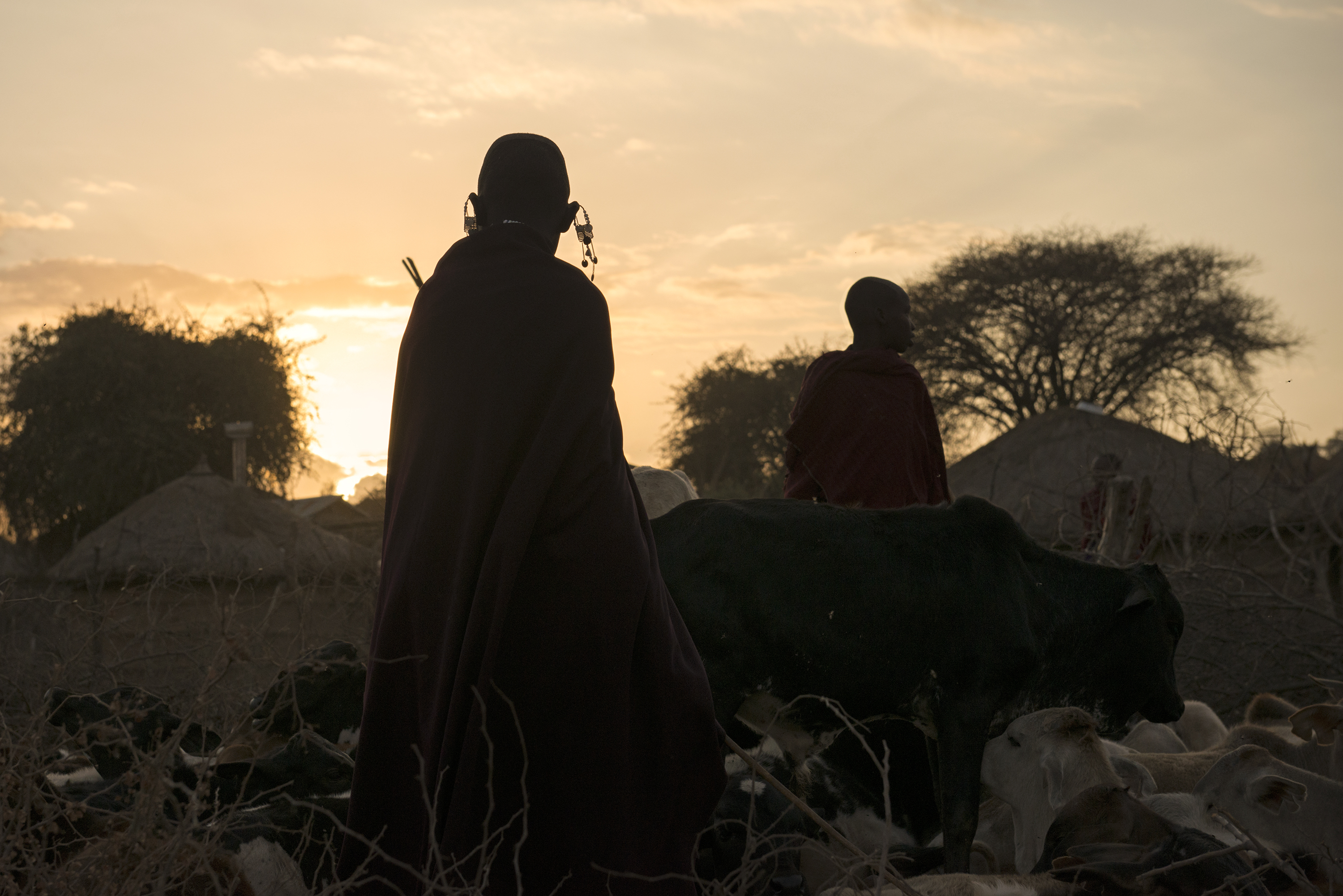 Maasai Tribe -- Sunset Silhouette