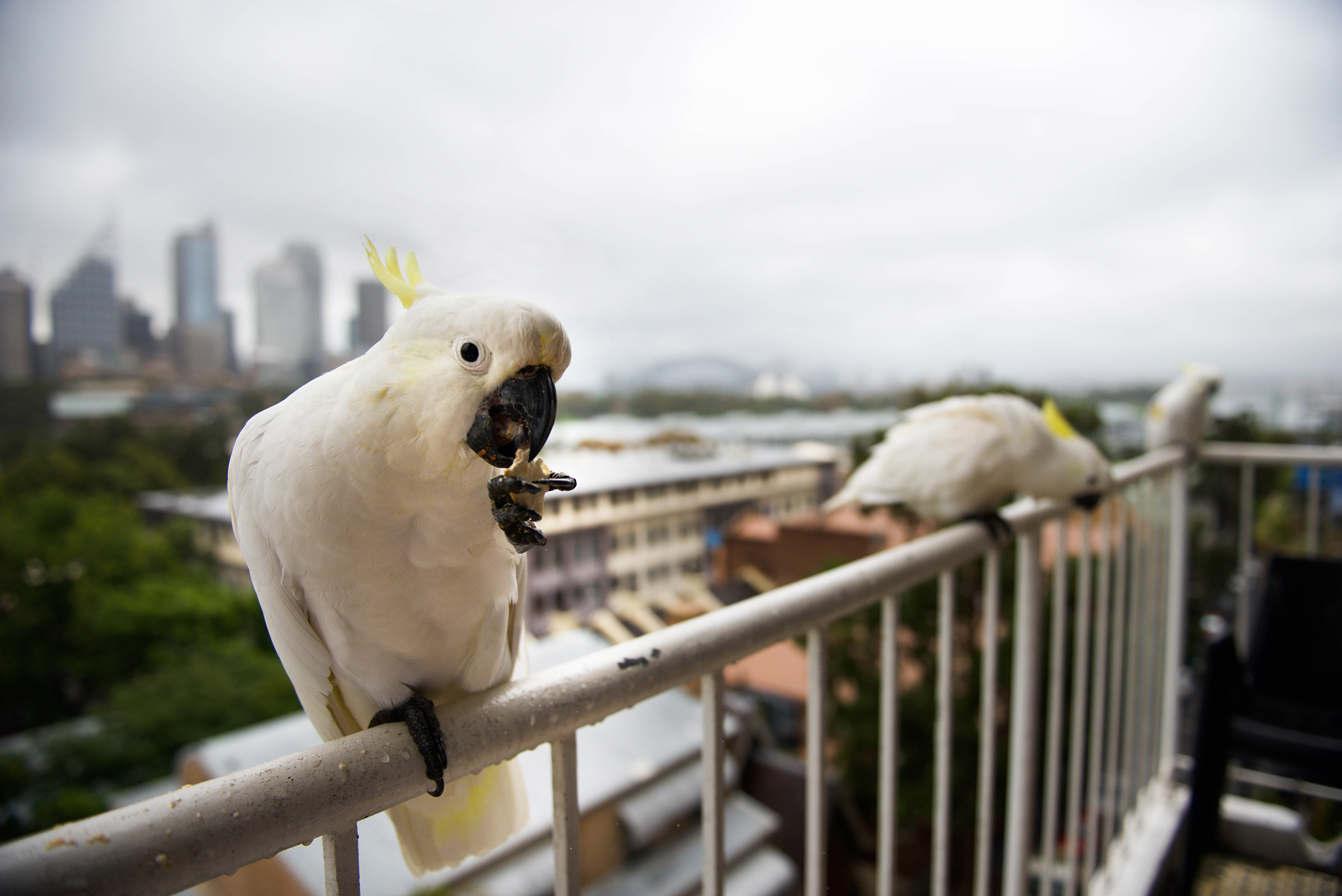 COCKATOO-LE TWO Sydney, Australia