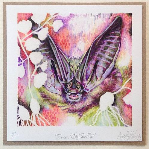 """Townsend's Big Eared Bat"" print"