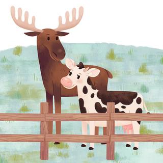 DAISY COW MEETS A MOOSE