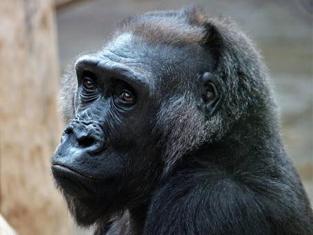 Prague Zoo to get financial aid