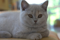 5 Monate alt Josie (13)