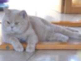 Winnie 1 Februar 2015.JPG