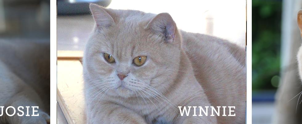 NEWS!!! Josie und Winnie bekommen Nachwuchs!