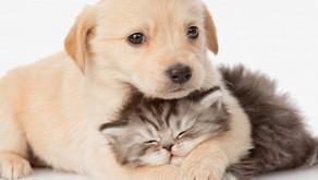 One2One a supporto degli animali con Salute.Pet