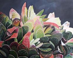succulents 1