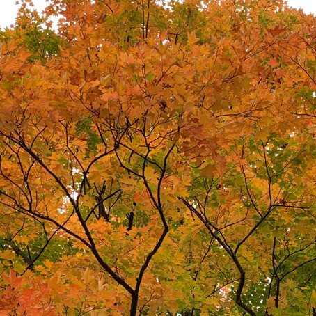 Autumn spectacle at the farmette