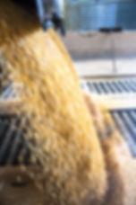 Truck makes a corn dump at an animal fee