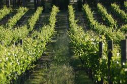 Millhouse Cottage Swan Valley Wineries (5).jpg