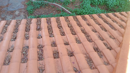 gutter cleaner in gillman,gutter cleaner,gutter,cleaner,cleaning,clean,gillman,business,company,in,near,roof,house,commercial,adelaide,hills,sa,local