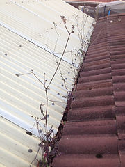 gutter cleaner in beaumont,gutter cleaner,gutter,cleaner,cleaning,clean,beaumont,business,company,in,near,roof,house,commercial,adelaide,hills,sa,local