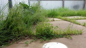 End Of Lease Gardener Adelaide RPG