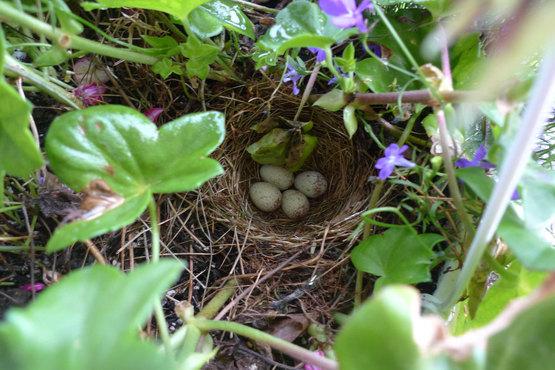 Little eggs