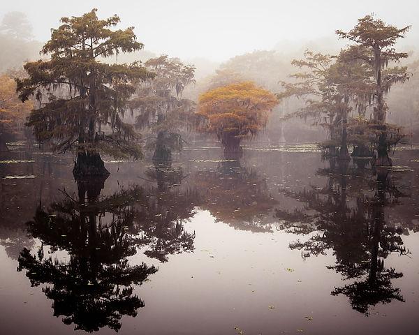 floating forest final for LPOYA.jpg