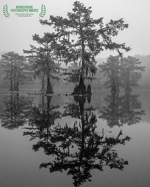 reflecting tree caddo bnw.jpg