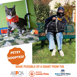 Pirate Petey adoped.png